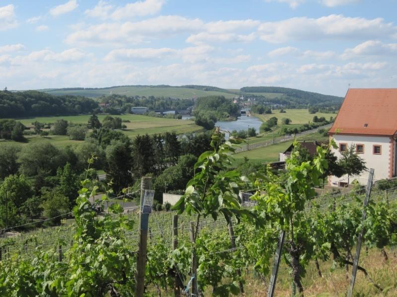 Weinberg bei Wein von 3 - Foto Matthias Virnekäs