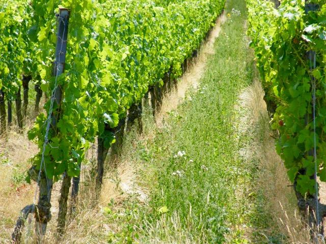 Weinberge Wein von 3 in Franken