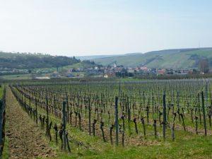 Weinberg Stammheim Wein von 3