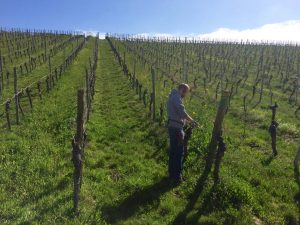 Weinberg Wein von 3 Zeilitzheim Stammheim