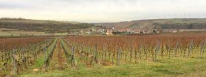 Weinberg Rodung Stammheim Wein von 3