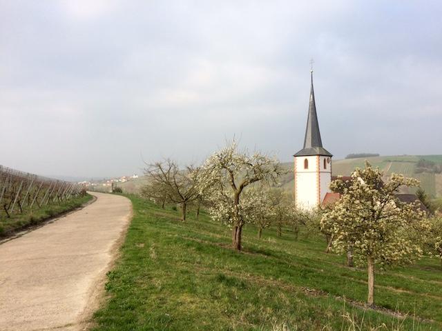 weinberg stammheim weinvon3