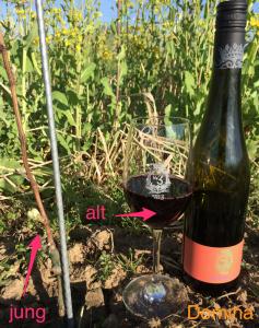 Domina Rotwein Wein von 3 Franken