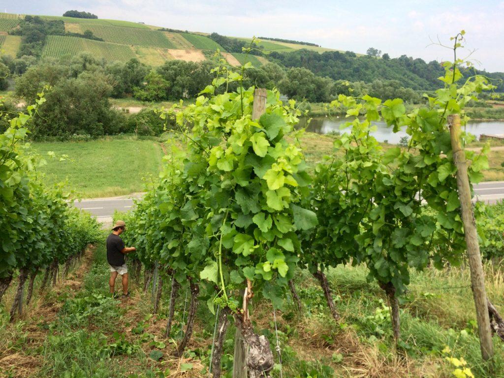 Wein von 3 in Franken