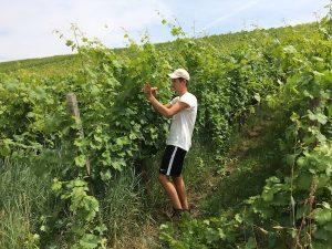 Praktikum im Weingut Wein von 3