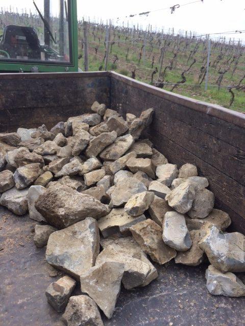Steine auflesen im Weinberg - Wein von 3