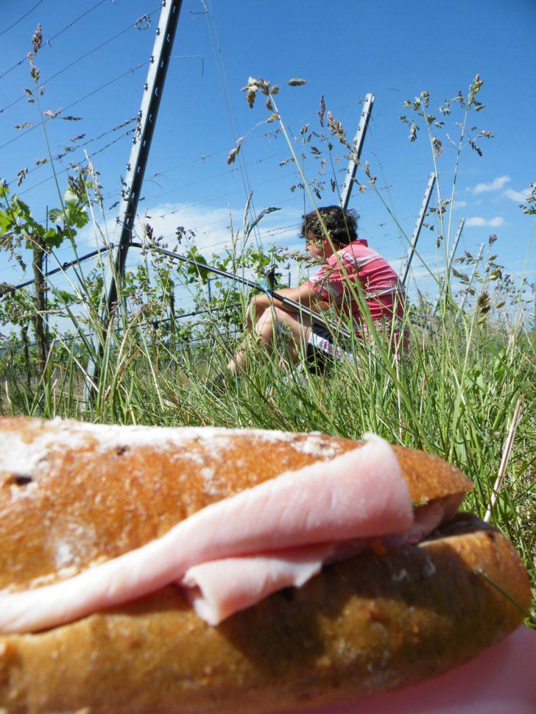 Sommer Picknick Weingut Wein von 3 Zeilitzheim