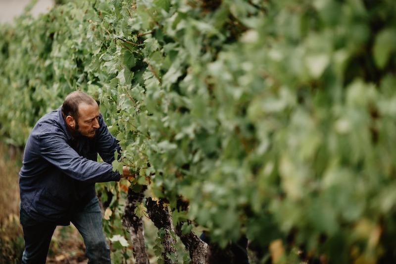 Wein von 3 Weinlese 2019 Foto Simone Betz