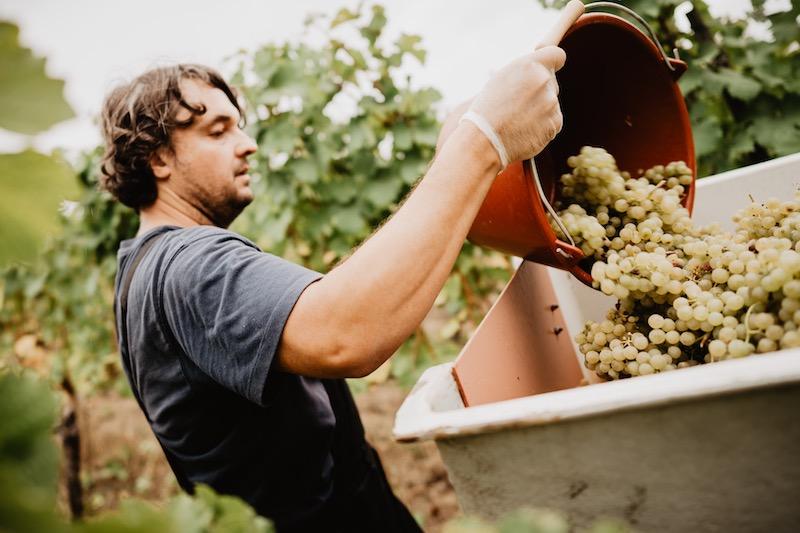 Wein von 3 Weinlese 2019 - Foto Simone Betz