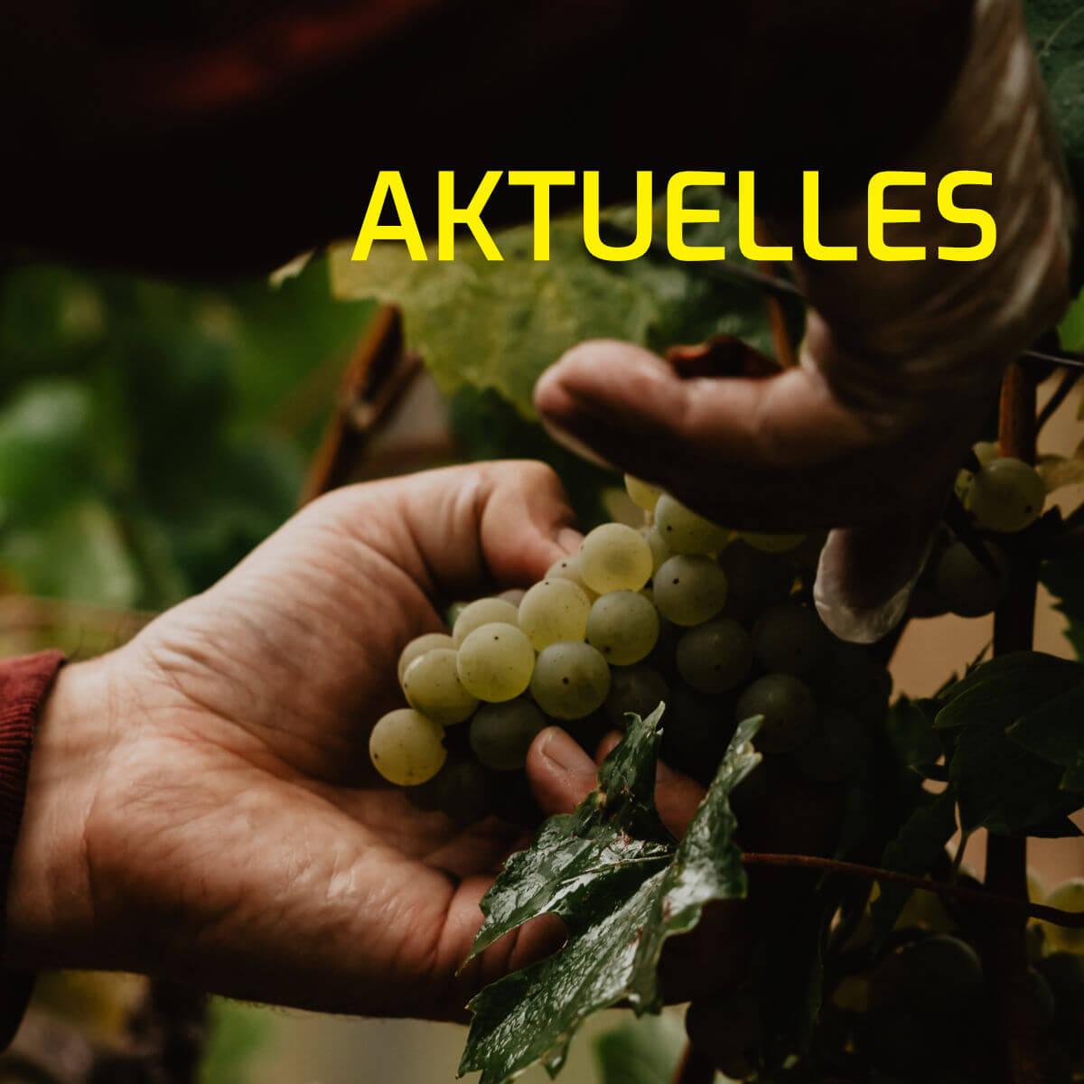 fränkisches Bioland Weingut auf Schloß Zeilitzheim in Franken in der Nähe von Würzburg_Wein von 3_Photographed by Selene adores_3